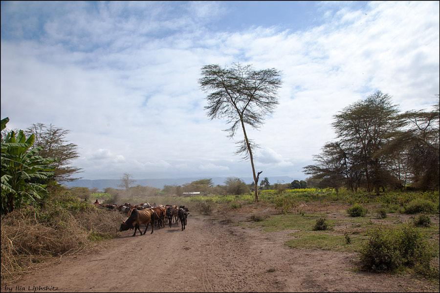 Landscapes of Tanzania №5