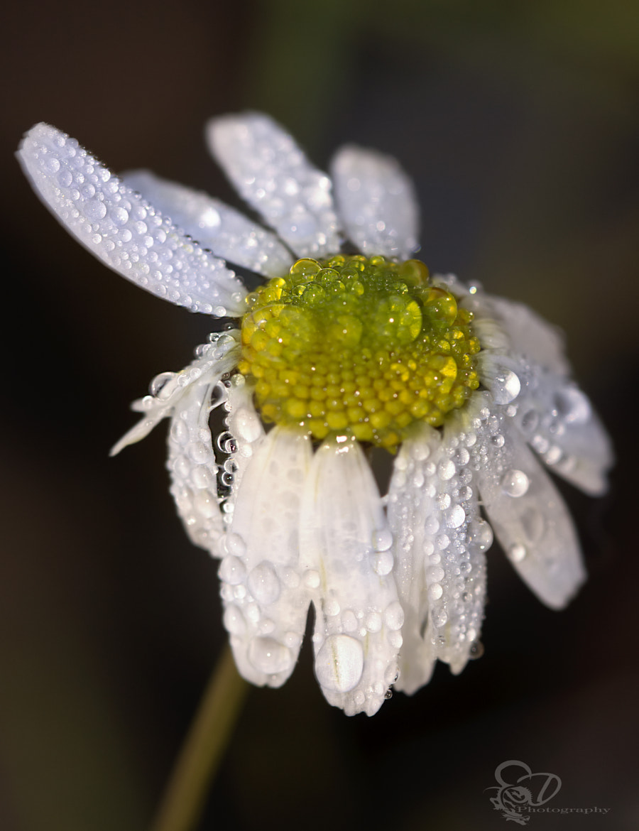 Photograph drops... by Danny schurgers on 500px