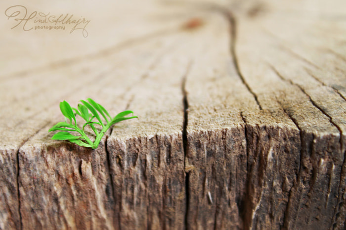 Photograph Untitled by Hind alhajry on 500px