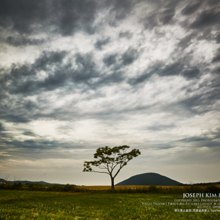 Tree around the clouds, Canon EOS 5D MARK III, Canon EF 16-35mm f/2.8L II USM