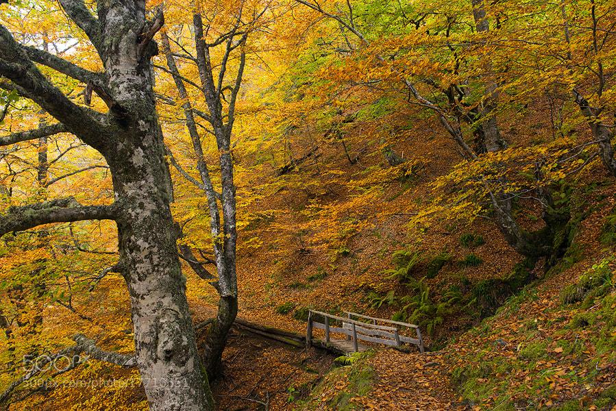 Photograph Seasonal Colour Inspiration by Arnold Moolenaar on 500px