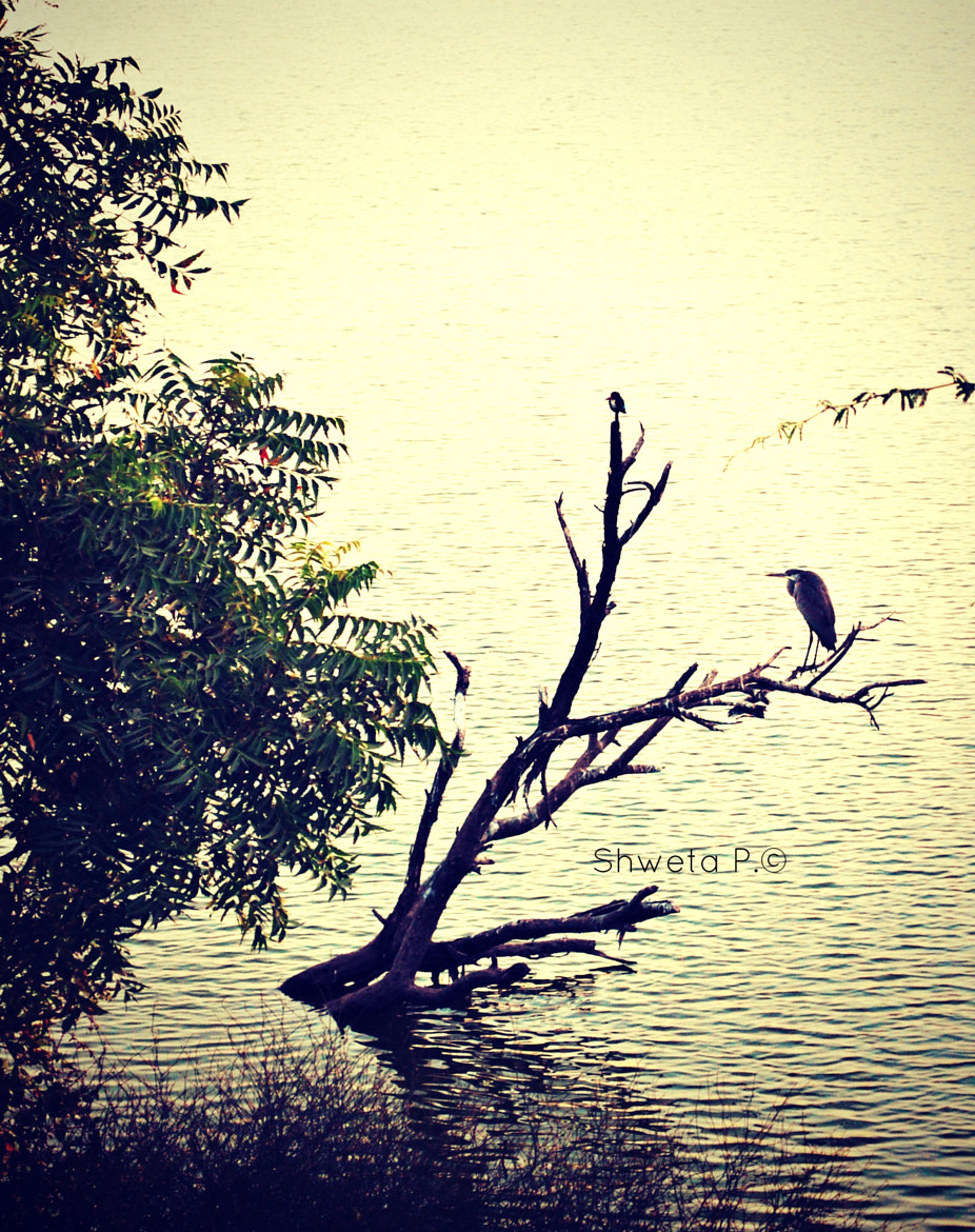 Photograph birds resting on a broken branch in the lake by Shweta Paryani on 500px