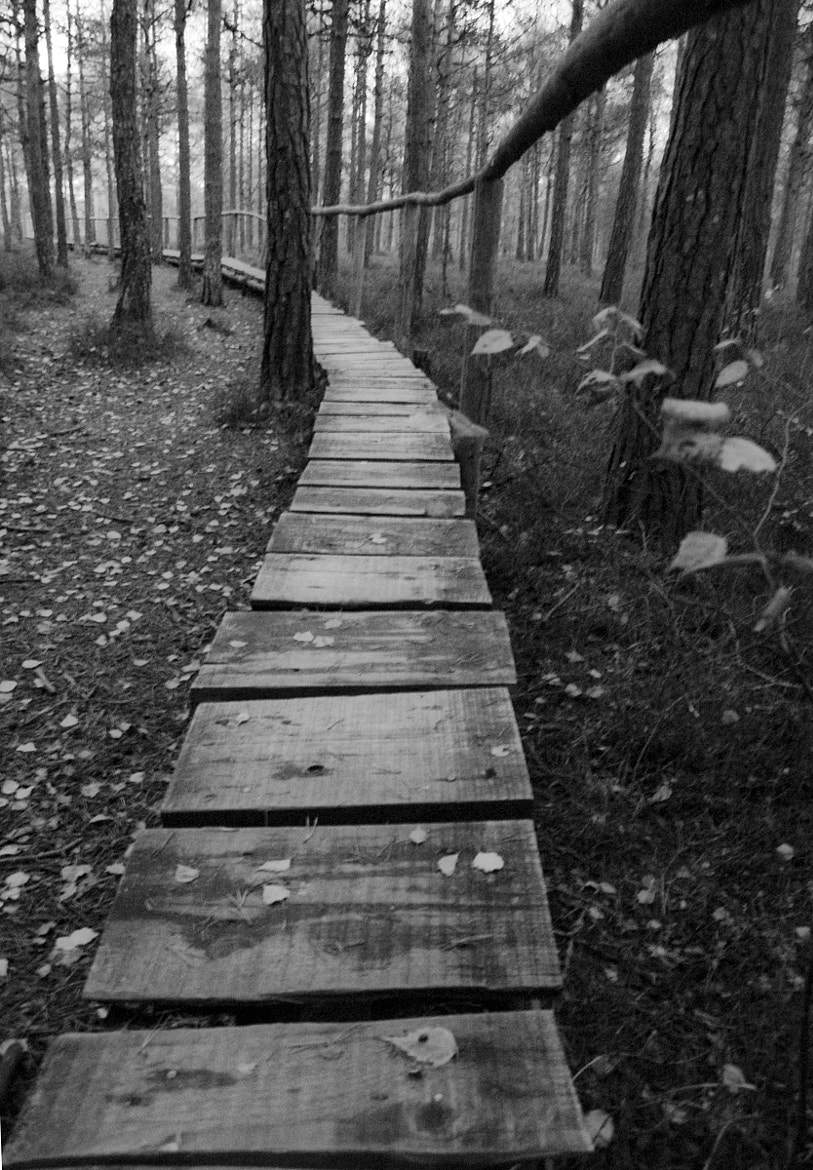 Photograph Into the woods by Gabriel Ciora-Márkus on 500px