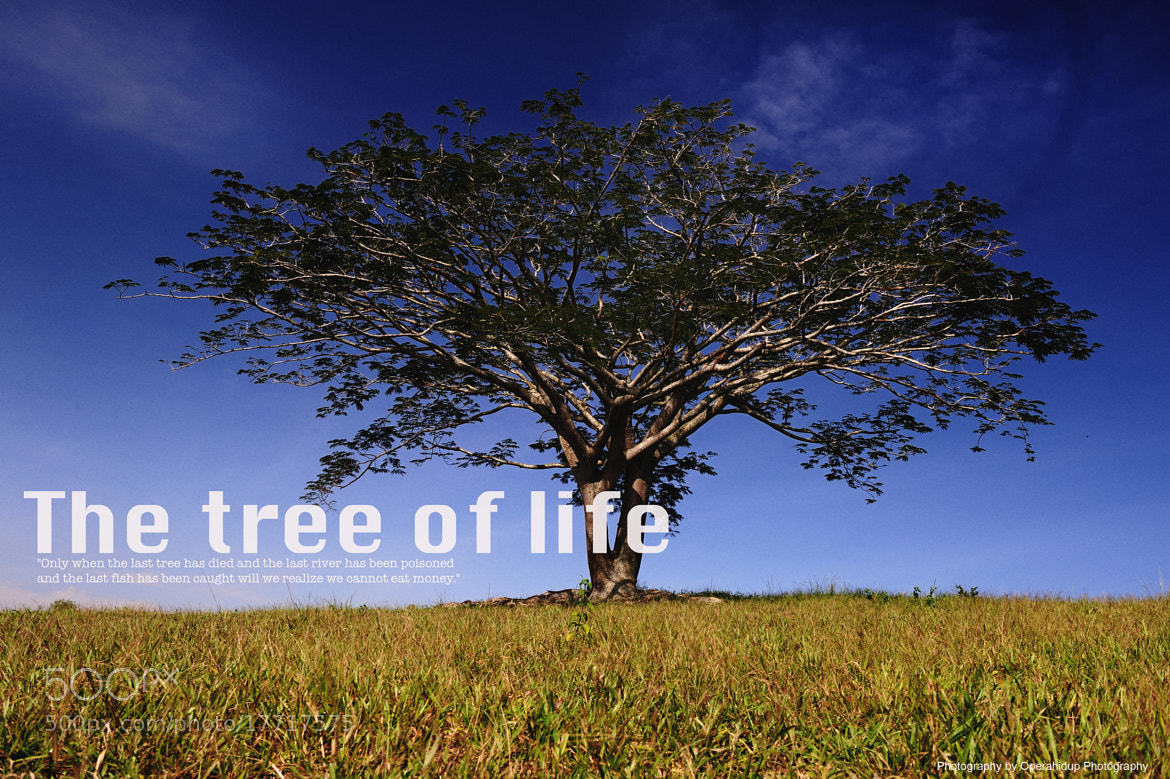 Photograph THE TREE OF LIFE by OPERAHIDUP PHOTOGRAPHY on 500px