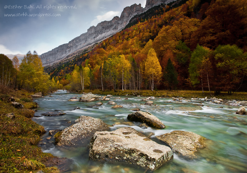 Photograph Otoño ventoso by Esther Bahi on 500px