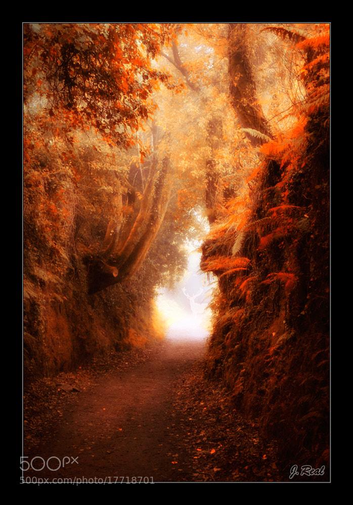 Photograph Lo Que La Luz Esconde by Juan Real on 500px
