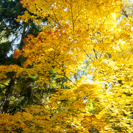 Otono. Autumn. Золотая осень