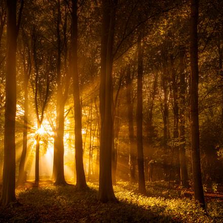 Radiant Rays