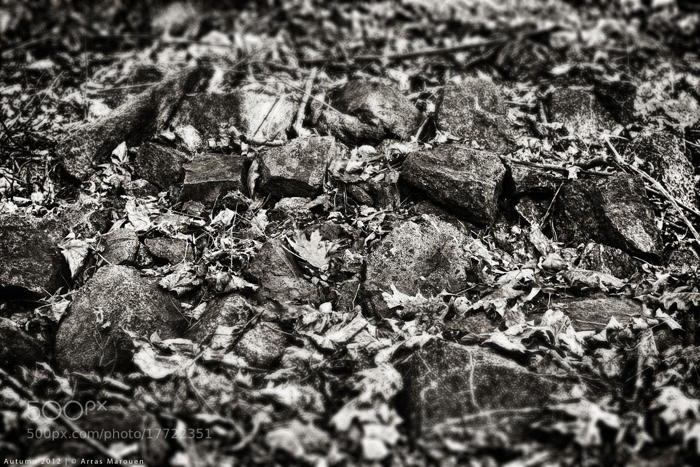 Photograph Autumn Details by Marouen Arras on 500px
