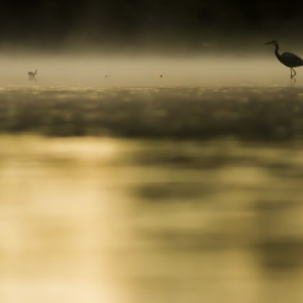 Lonely, Canon EOS 7D, Canon EF 300mm f/4L