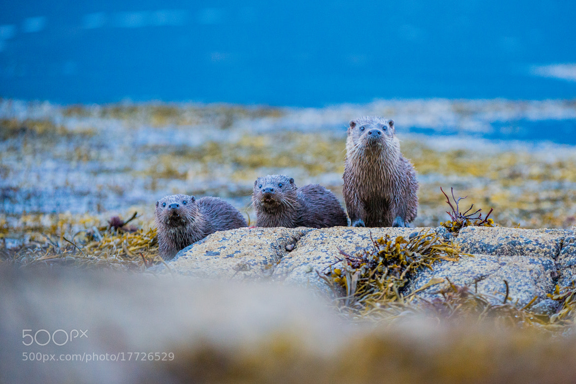 Photograph Otter Family by Seb Loram on 500px
