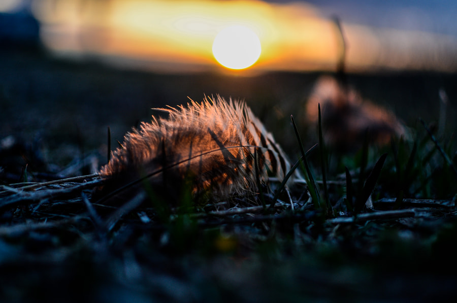 Feathered Sunset by Kevin Taillieu on 500px.com