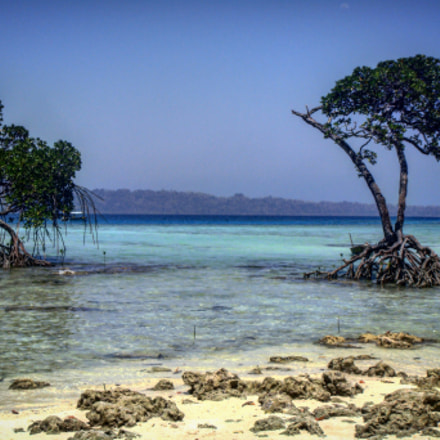 Mangroves at Havelock Island, Sony DSC-T77
