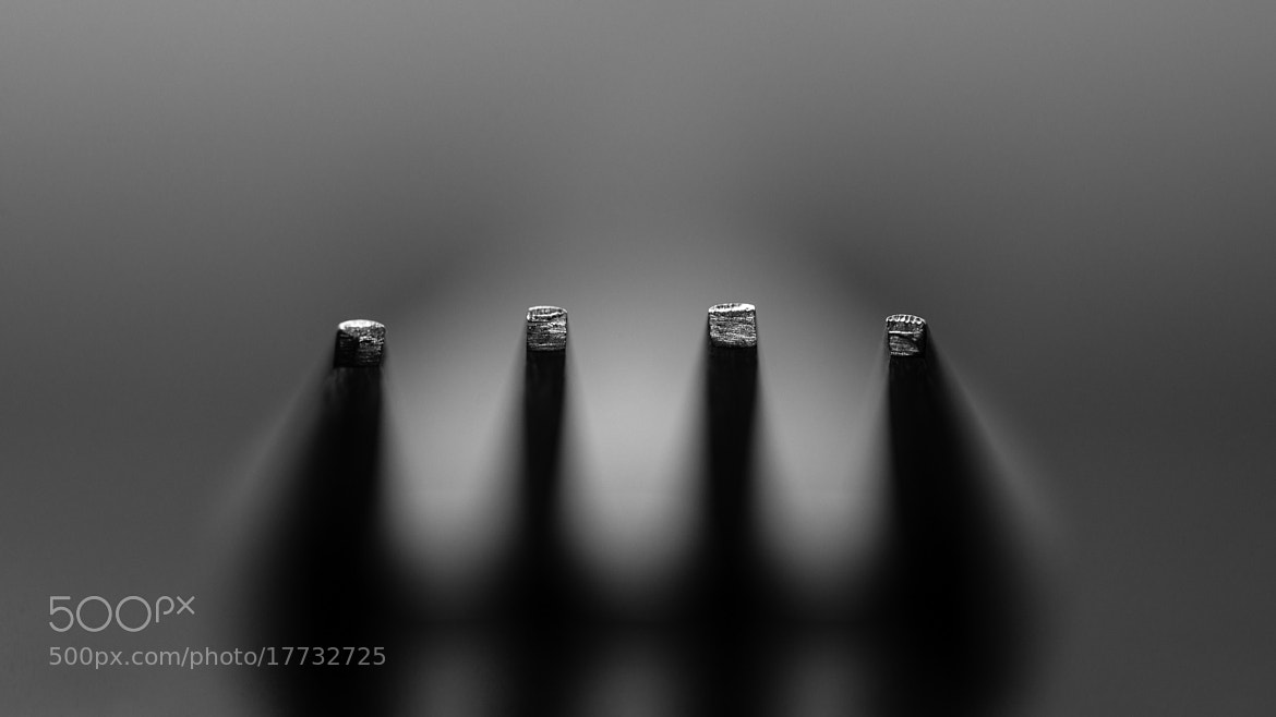 Photograph Fork by Abishek Murali Mohan on 500px