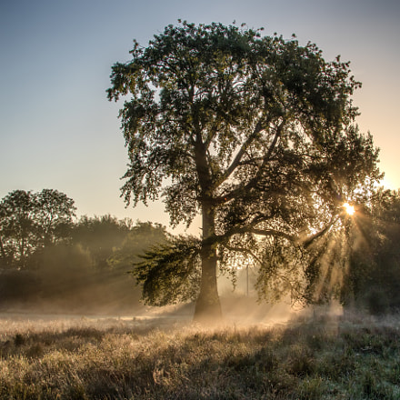 Early morning, Homington, Canon EOS 7D MARK II, Canon EF 35-350mm f/3.5-5.6L