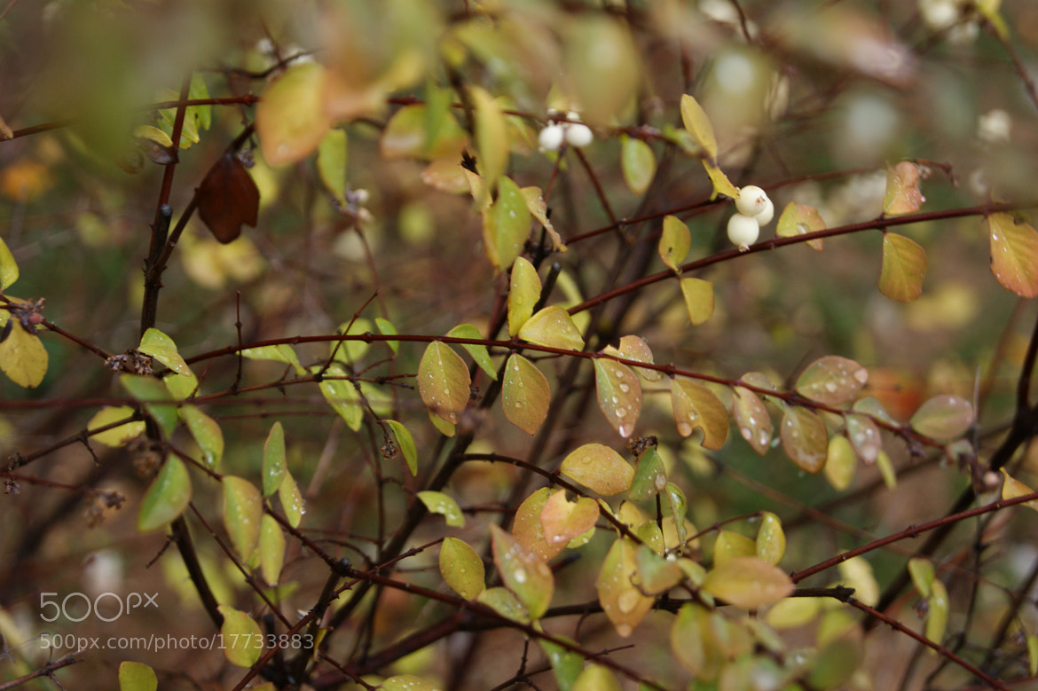 Photograph Leaves by Haris Derala on 500px