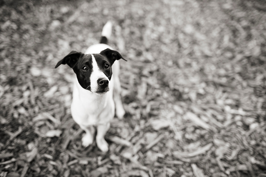 Photograph Zoey by Anthony Helton on 500px