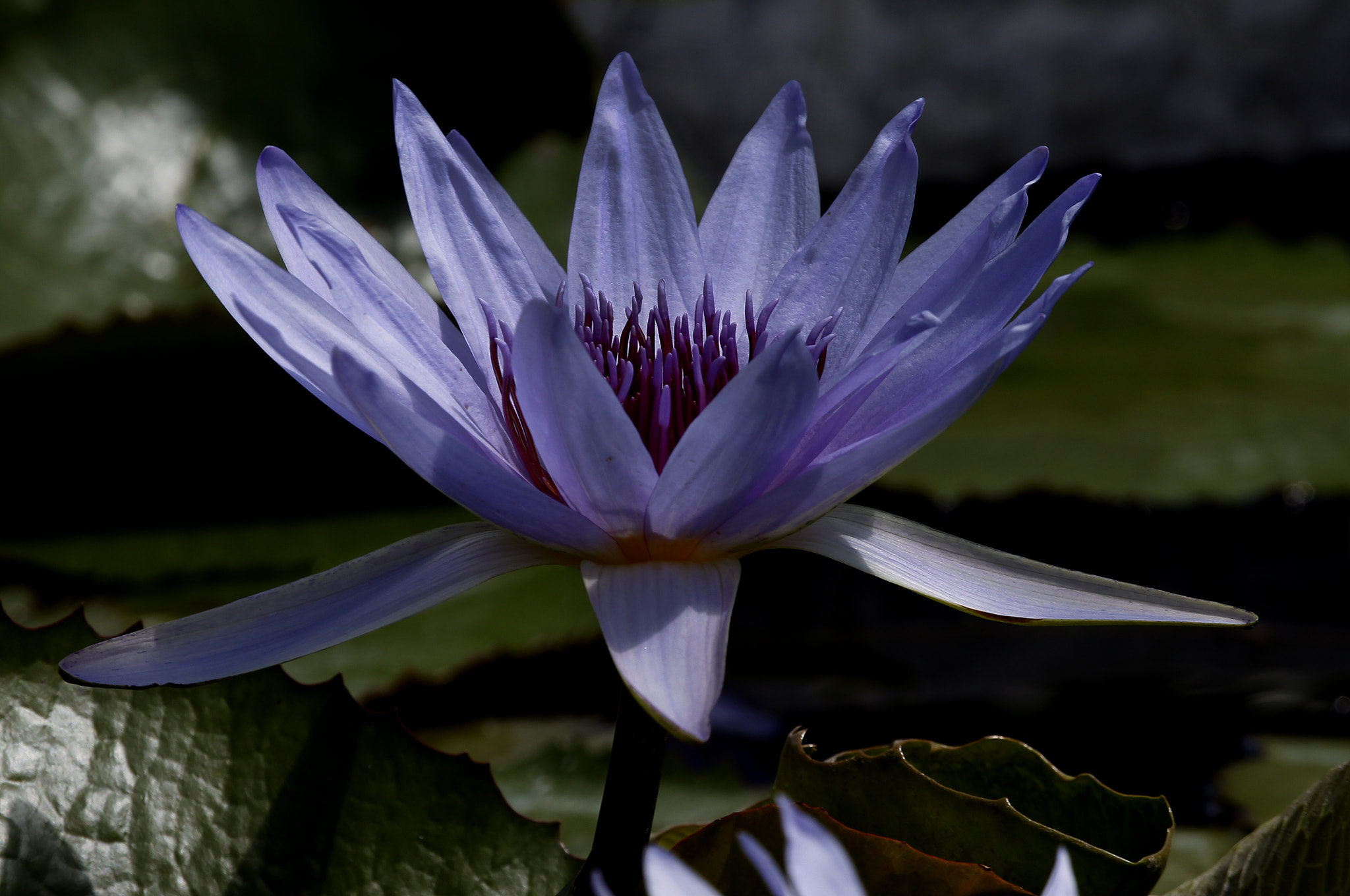 Photograph Water Lilly by Cristobal Garciaferro Rubio on 500px