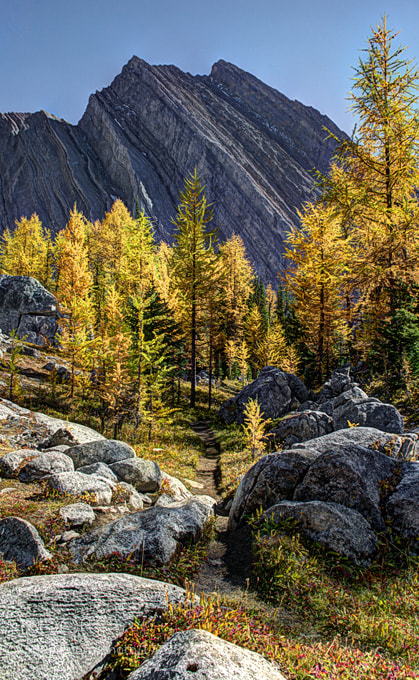 Photograph Kananaskis Larch by mike kap on 500px