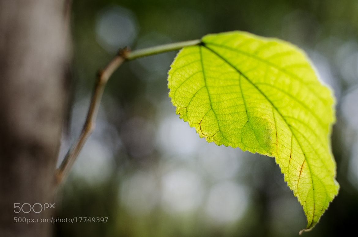 Photograph Green Leaf by Soleil Neon on 500px