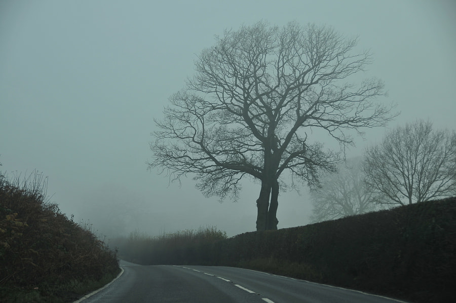 Fog in the UK by Sandra on 500px.com