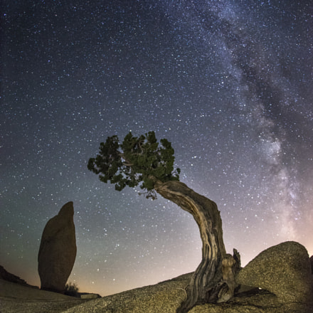 Juniper Monolith Milky Way, Sony ILCE-7R, Sigma 15mm F2.8 Fisheye
