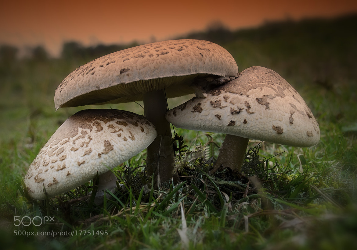 Photograph Mushrooms by Ton   lع Jeune on 500px