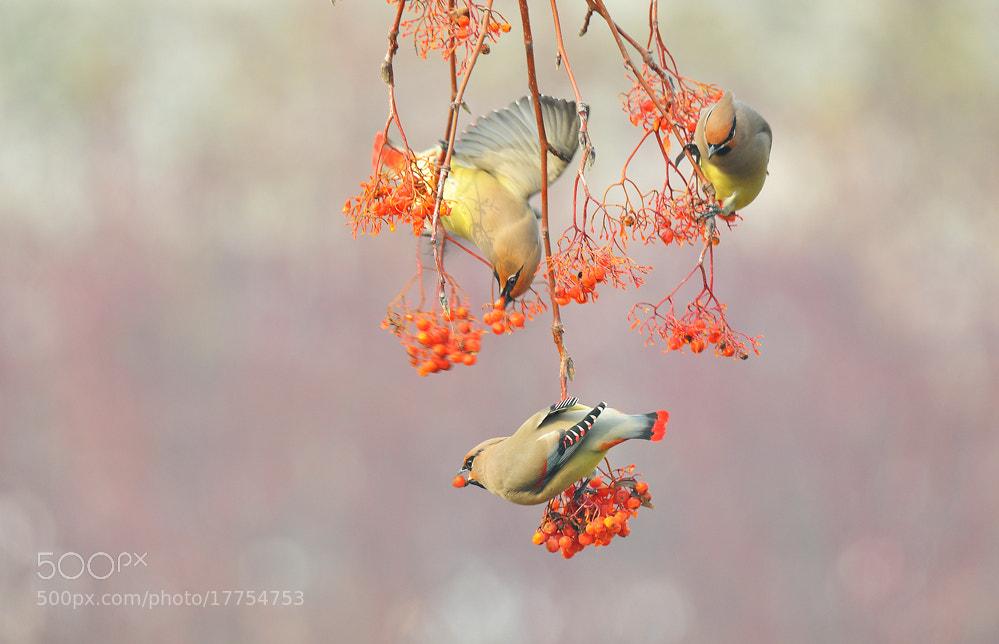 Photograph peacebird by Dmei Yerri  on 500px