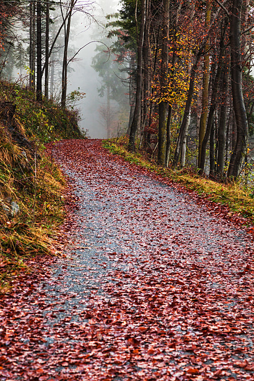 Photograph Road by Teo Teo on 500px