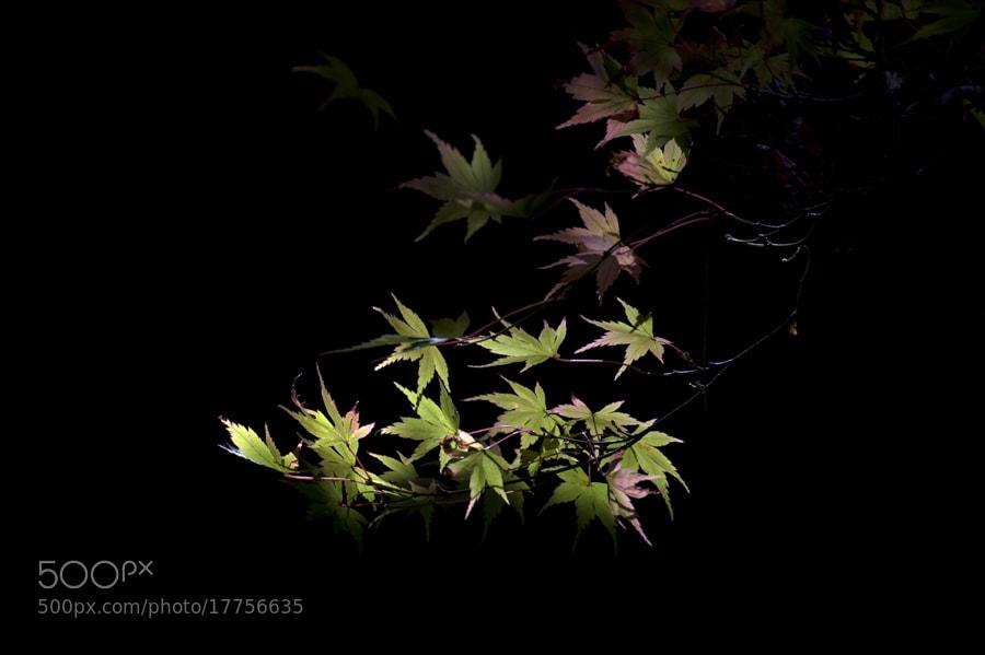 Photograph Autumn by taya liu on 500px