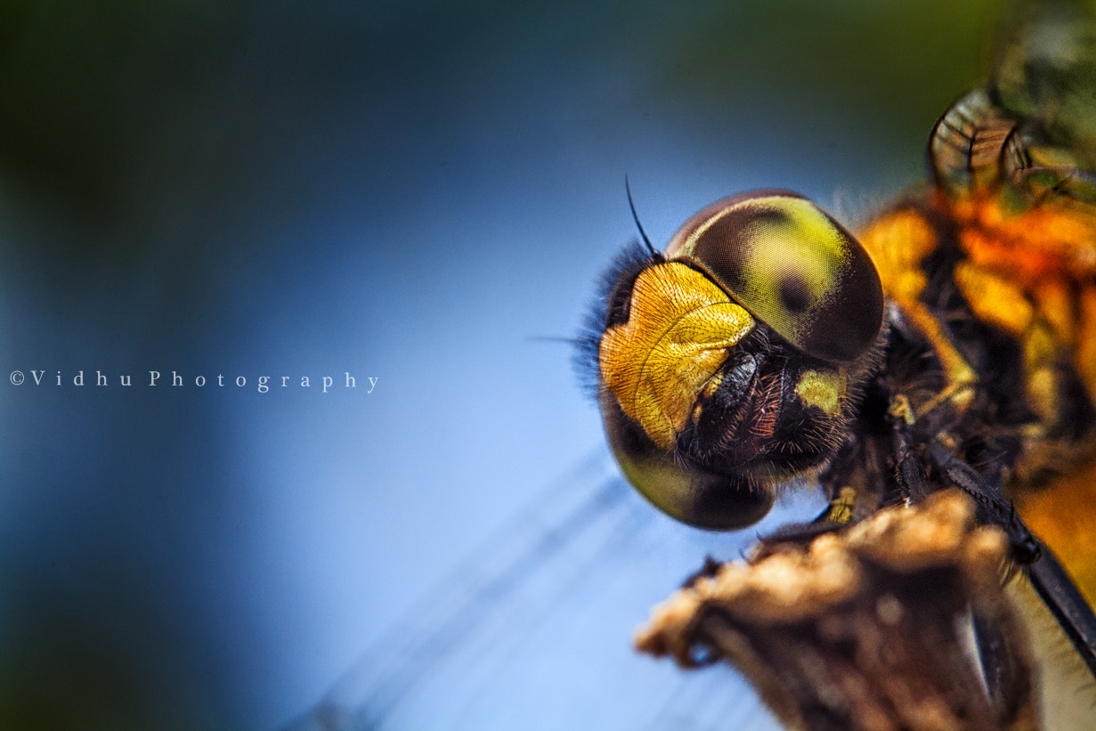 "Photograph ""Oh, this guy is everywhere!""  by Vidhu S on 500px"