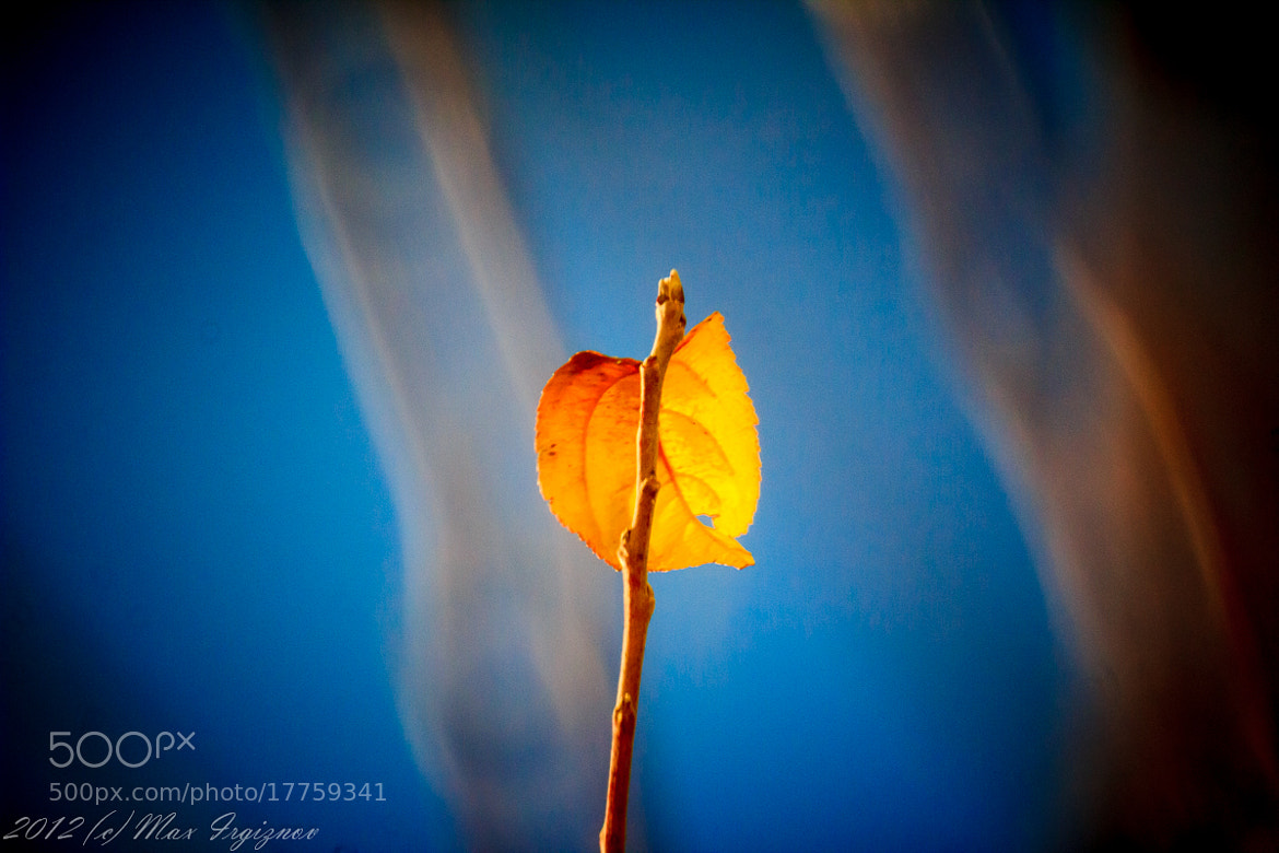 Photograph The last leaf of the tree by Max Irgiznov on 500px
