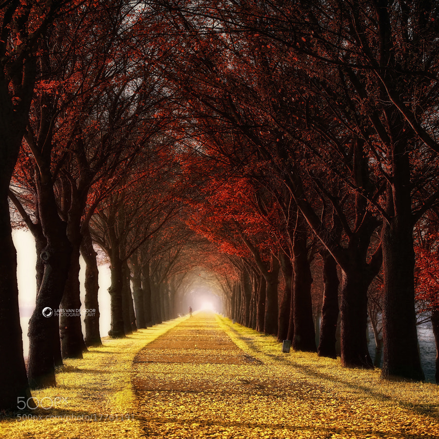 Photograph Wonder Curve by Lars van de Goor on 500px