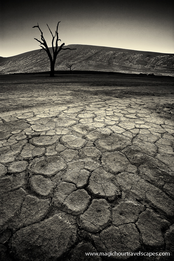 Photograph Parched by Kah Kit Yoong on 500px