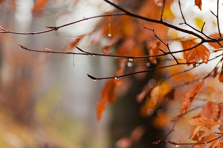 Photograph Autumn by Teo Teo on 500px