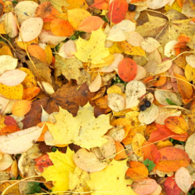Autumn by Anniina Karppinen (AnniinaKarppinen)) on 500px.com