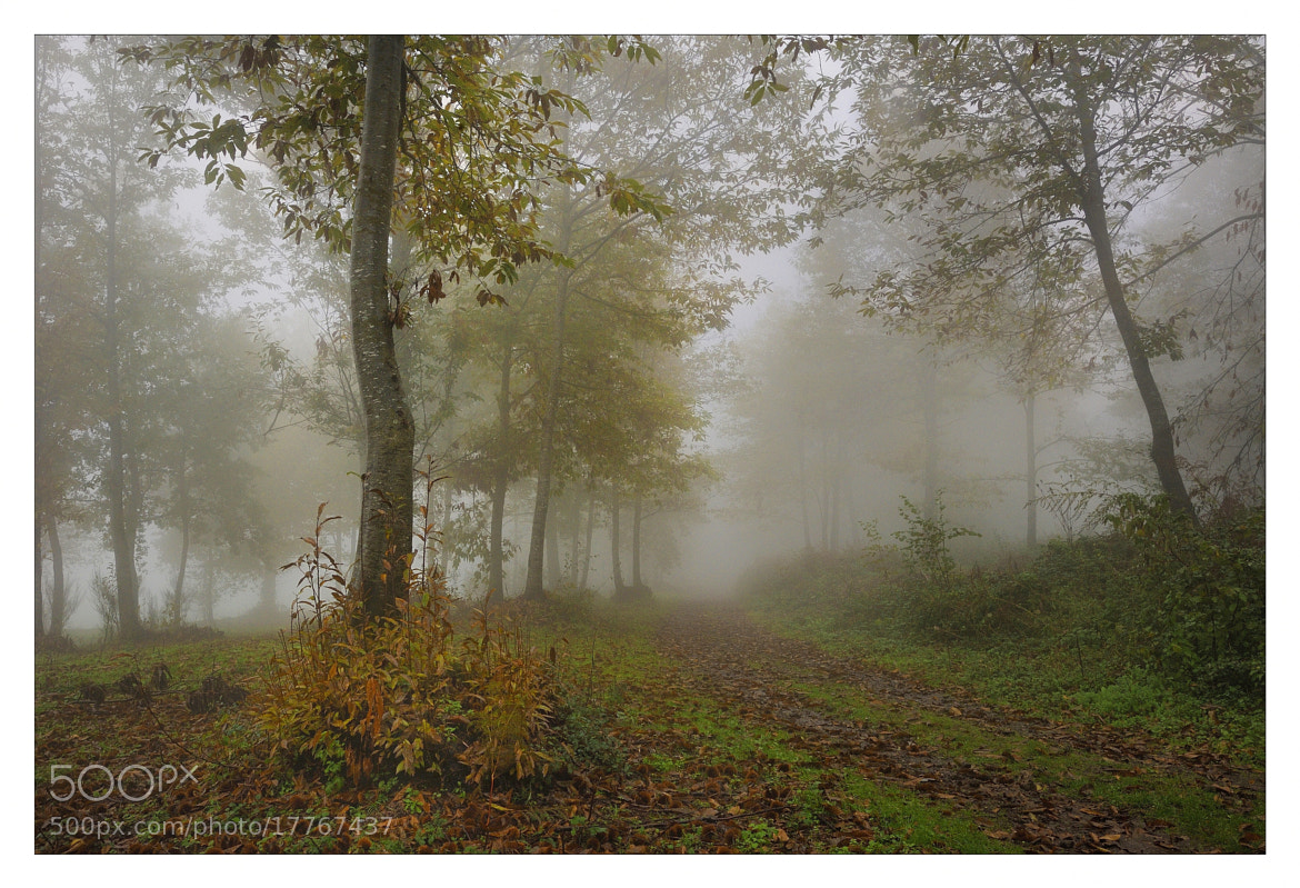 Photograph mist in the morning by mauro maione on 500px