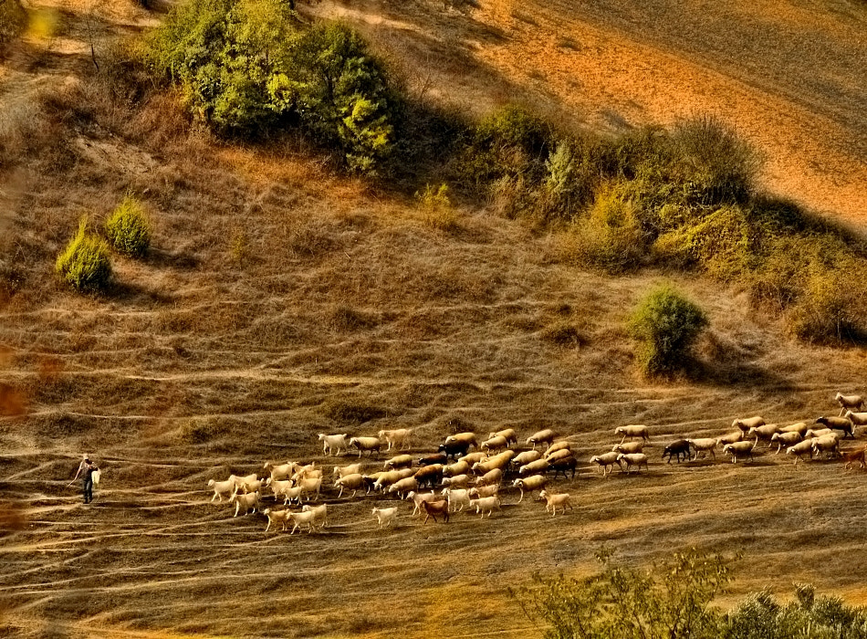 Photograph herd by Sedat Ozdemir on 500px