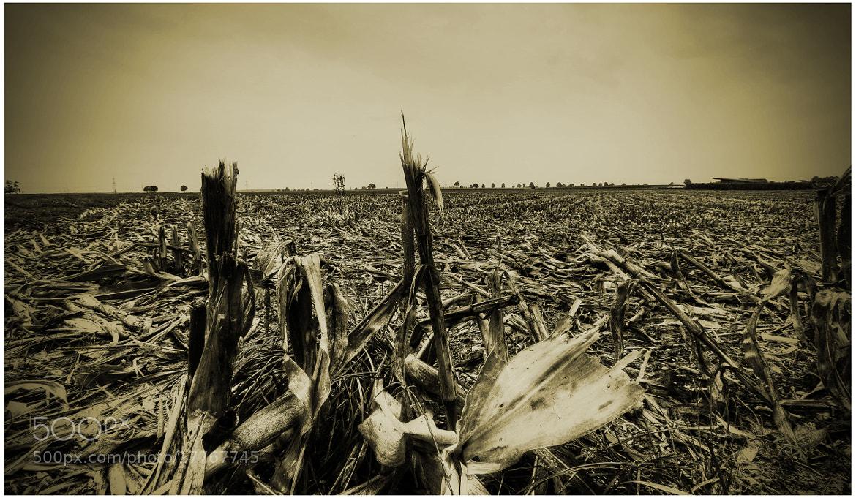 Photograph Untitled by Michael Wegener on 500px