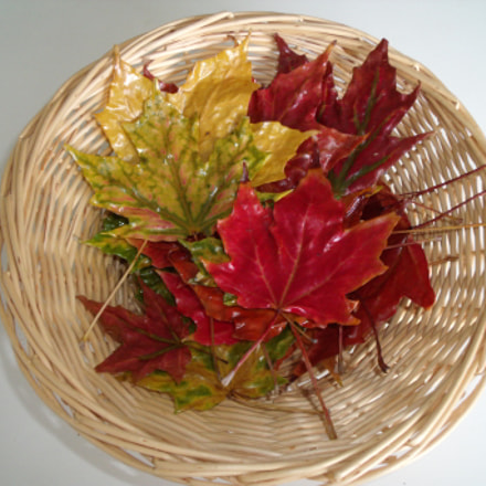 Preserved fall leaves in, Fujifilm FinePix J150W