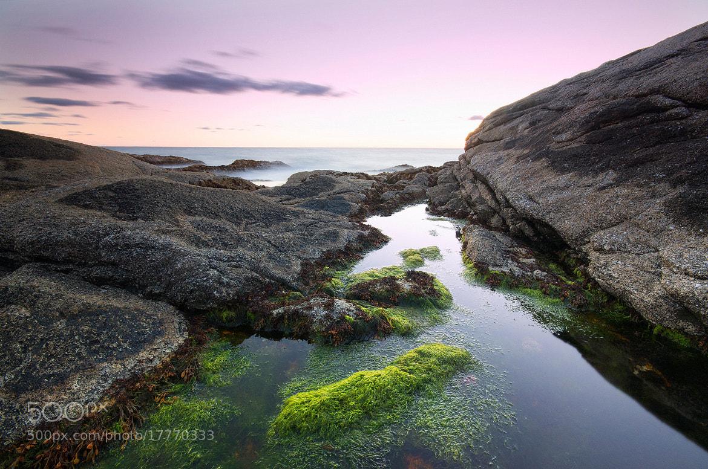 Photograph Algae Pools by Jeremy Hockin on 500px
