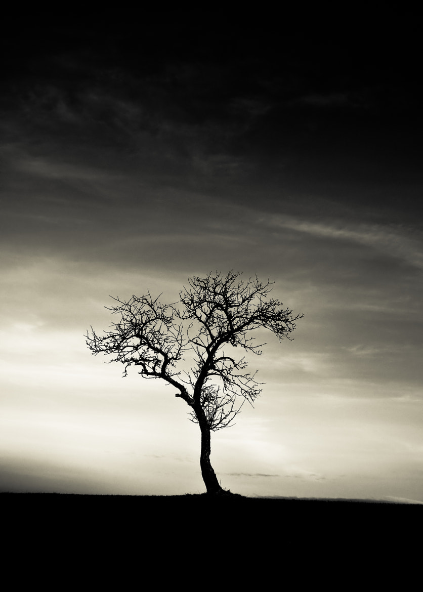 Photograph whispering tree by pinkmonty on 500px