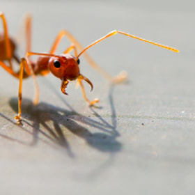 Atomic ant by Max Rinaldi (MaxRinaldi)) on 500px.com