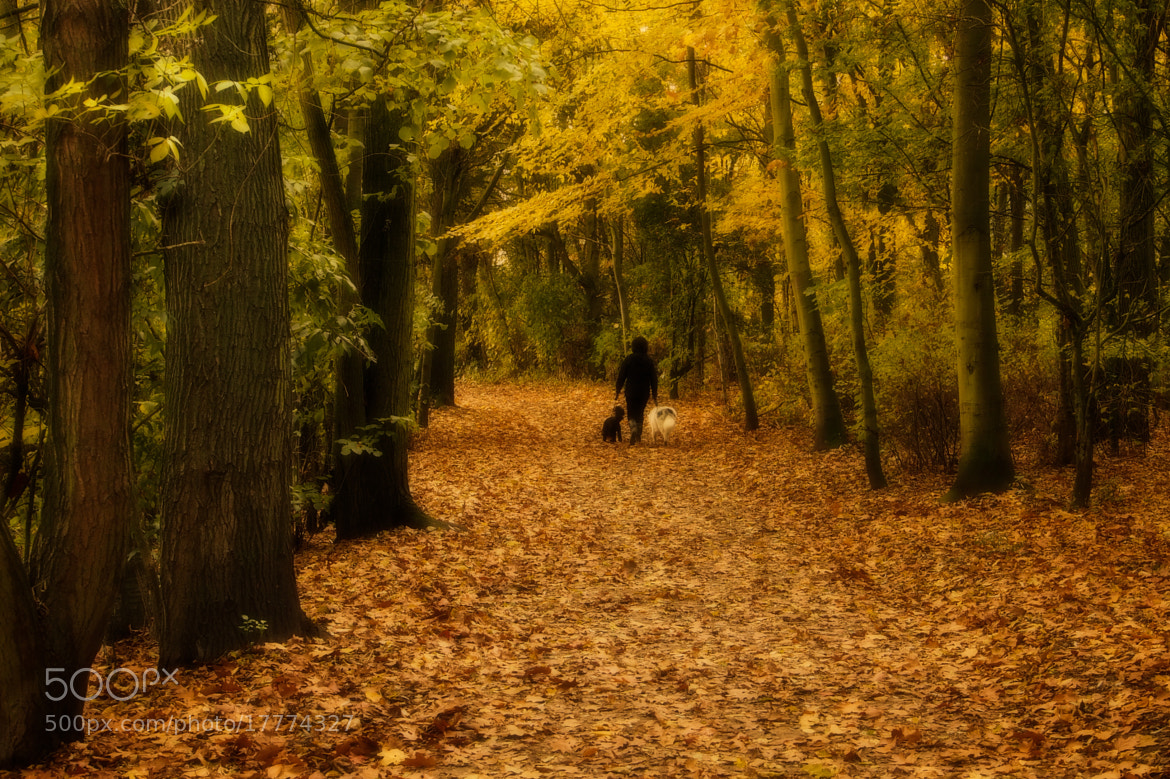 Photograph Walk in the Woods by John Purchase on 500px