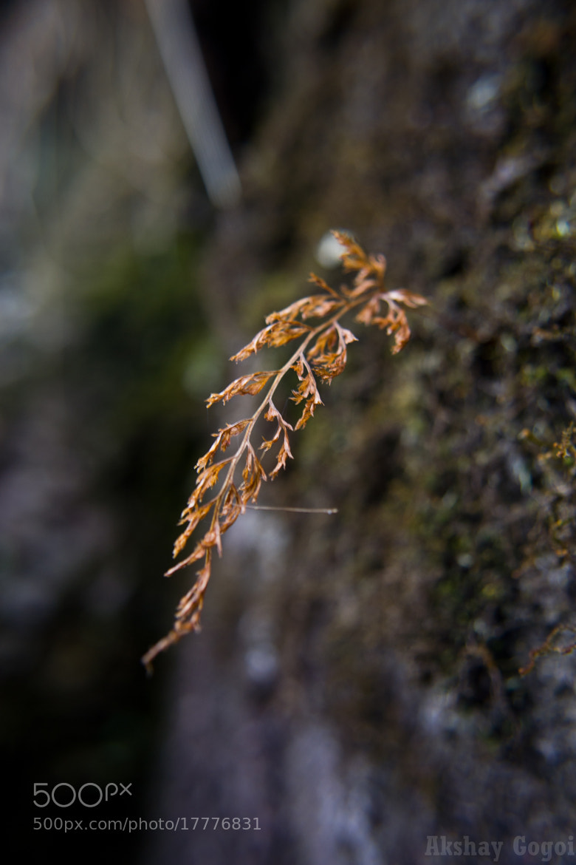 Photograph Deoriatal  by Akshay Gogoi on 500px