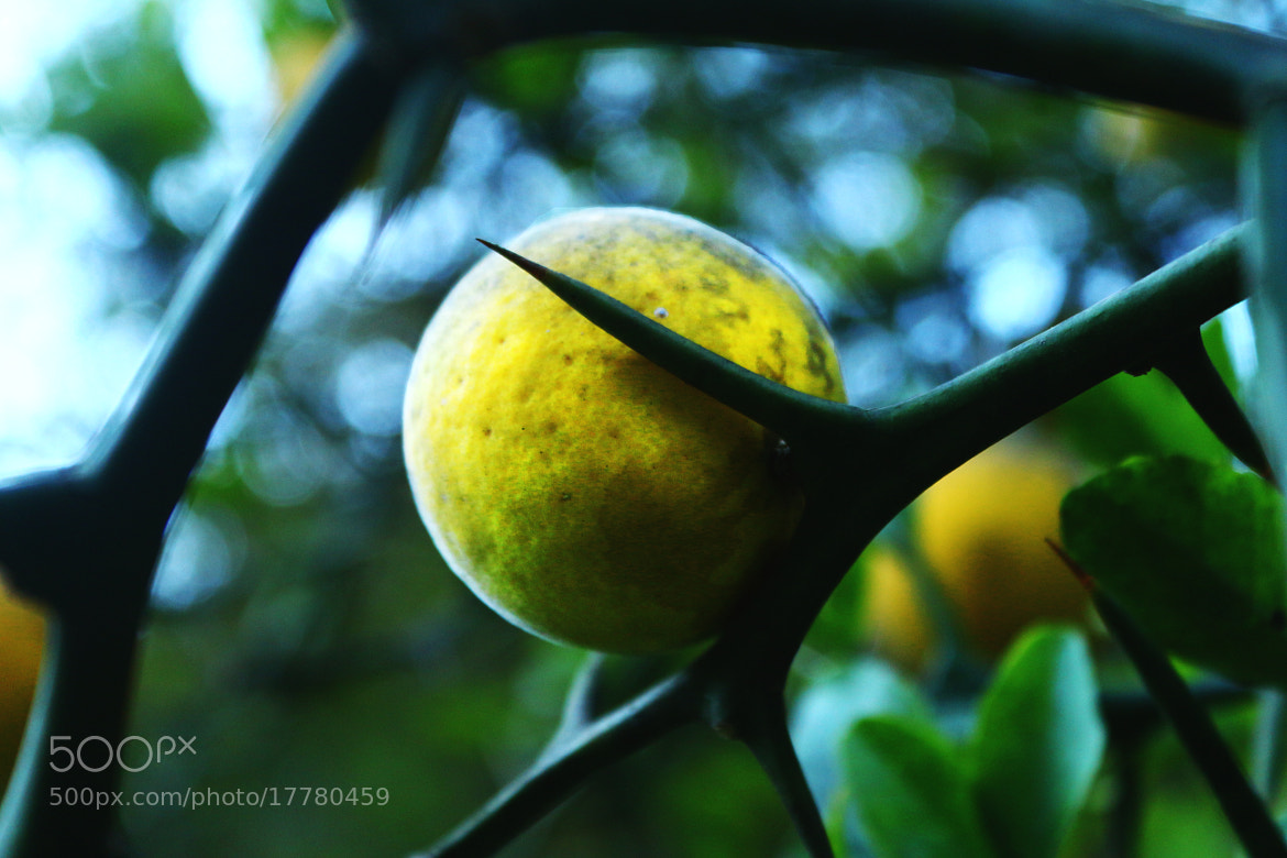 Photograph yellow fruit by lili  Kogonia on 500px