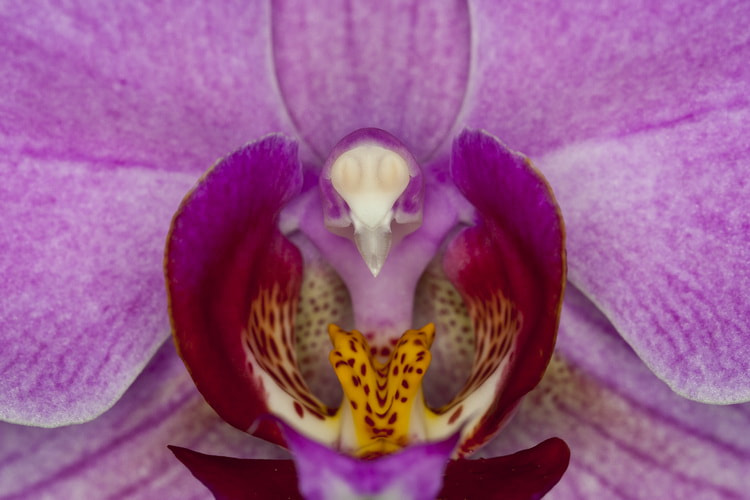 Photograph Orchibird by Barni Buslig on 500px