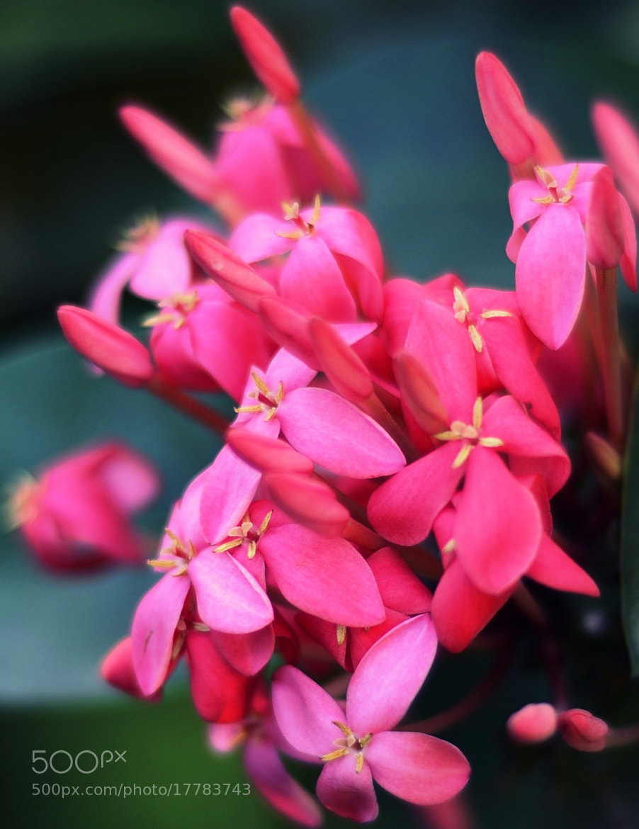 Photograph Flowers by Vedanta Baruah on 500px