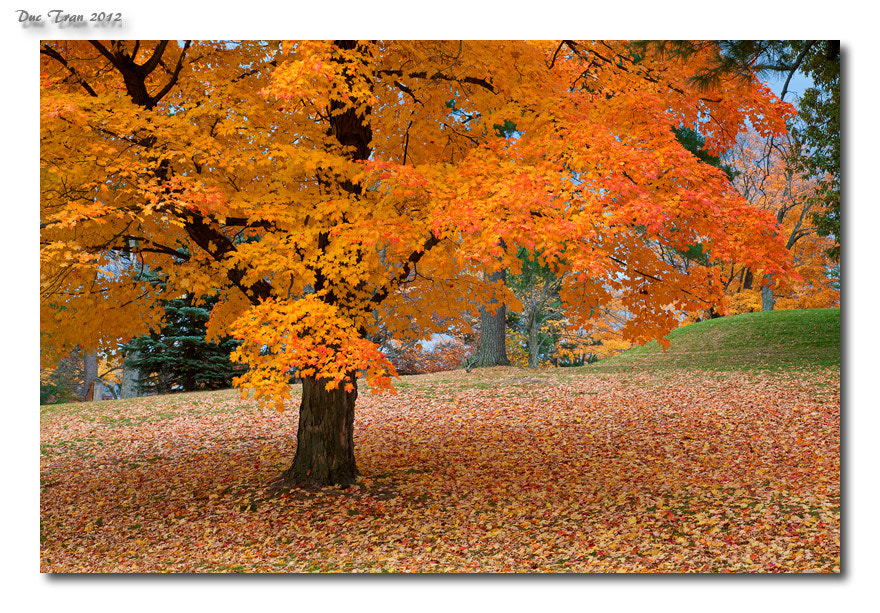 Photograph Fall 2012f by Duc Tran on 500px
