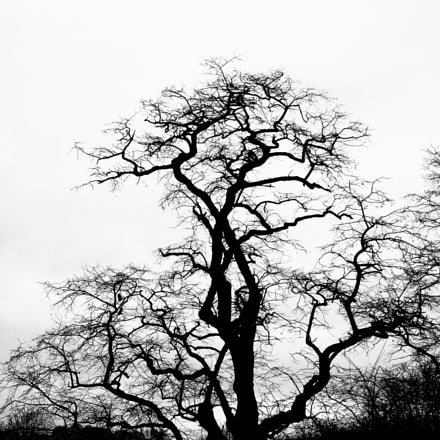 old tree, Fujifilm FinePix JV110